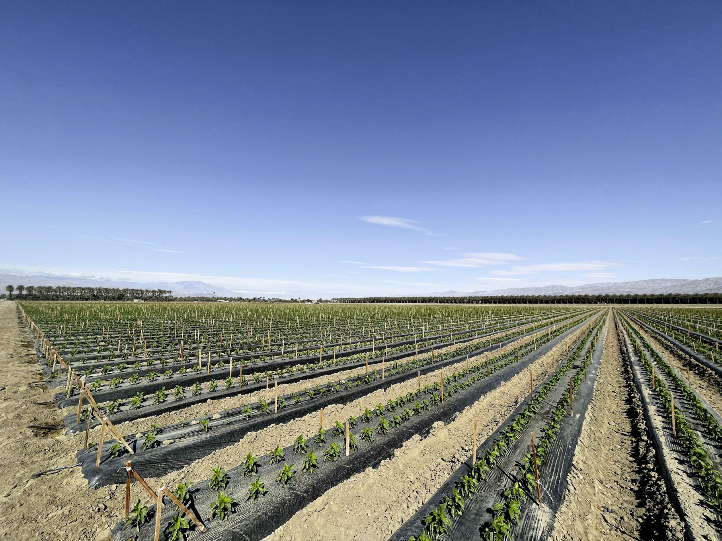 land-riverside-county-california-118-acres-listing-number-15577-2-2021-06-09-193706.jpg