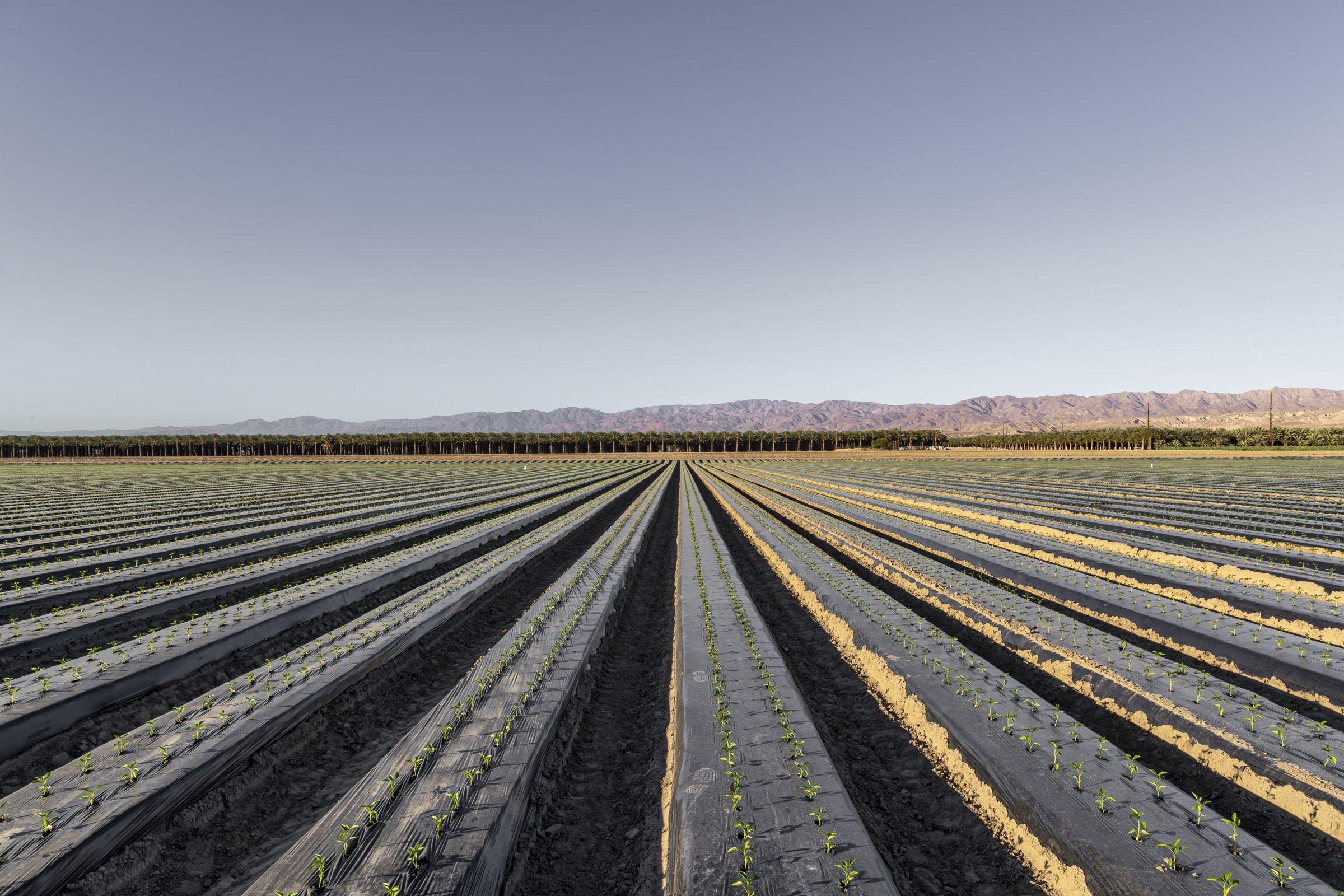 riverside-county-california-118-acres-listing-number-15577-0-2021-06-09-193627.jpg