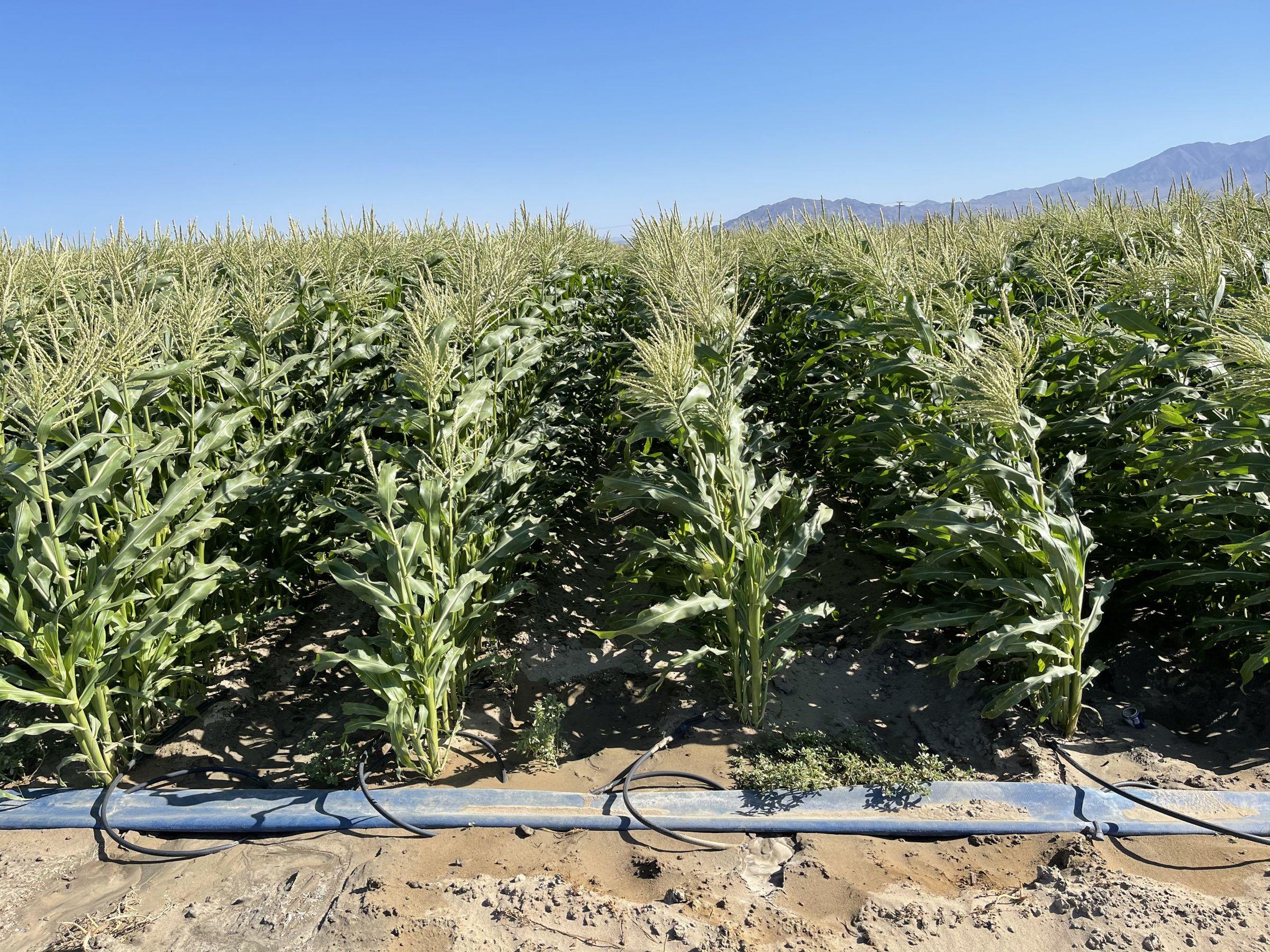 land-riverside-county-california-156-acres-listing-number-15579-0-2021-06-09-195823.JPG