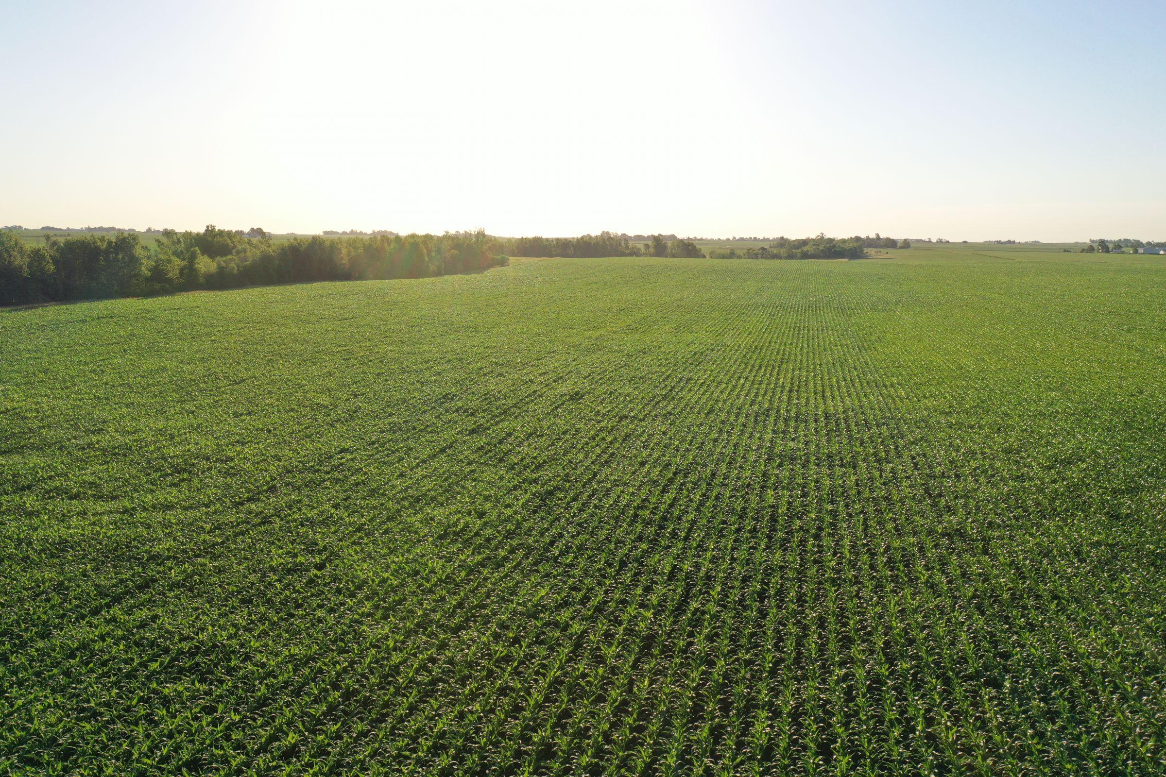 Boone County Iowa Farmland Auction/For Sale