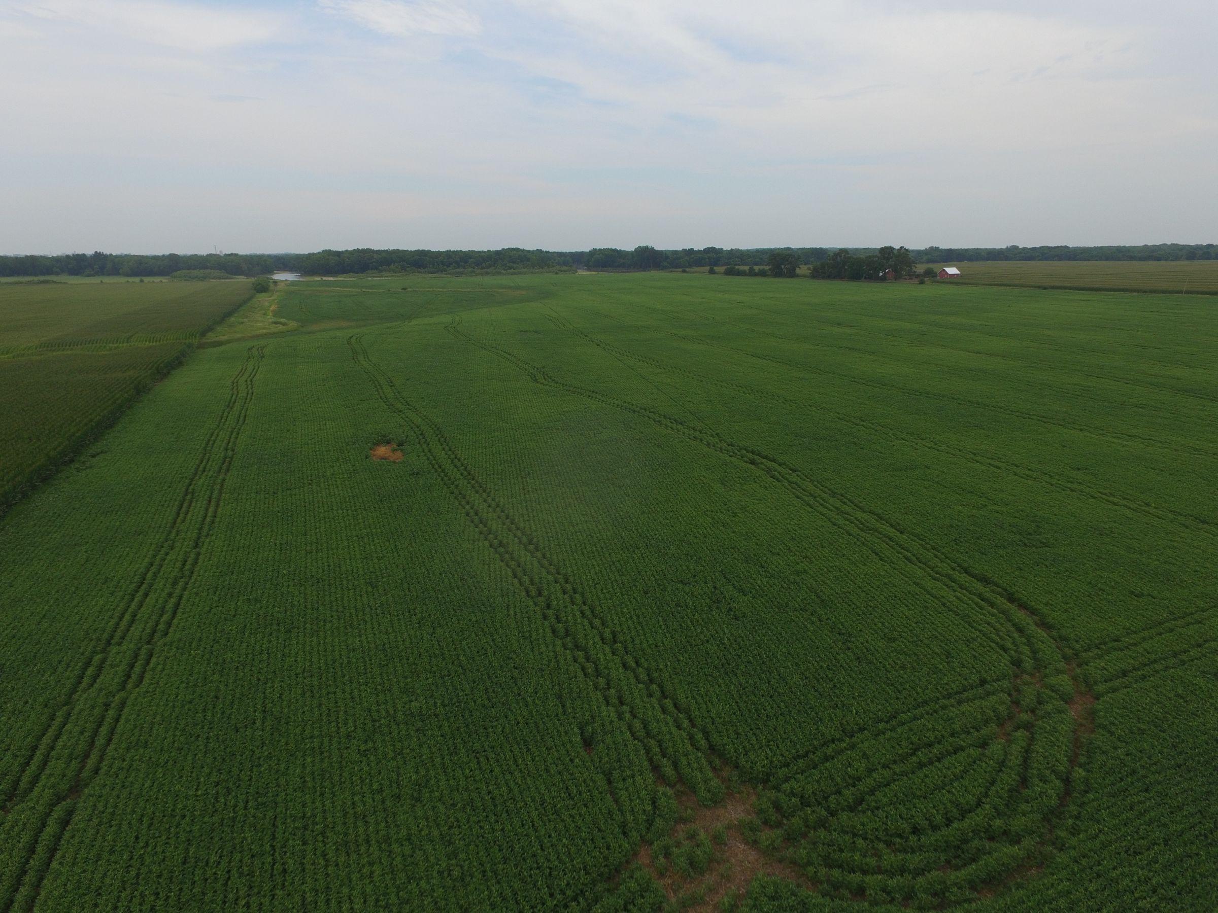 land-scott-county-iowa-80-acres-listing-number-15599-0-2021-07-27-190835.JPG