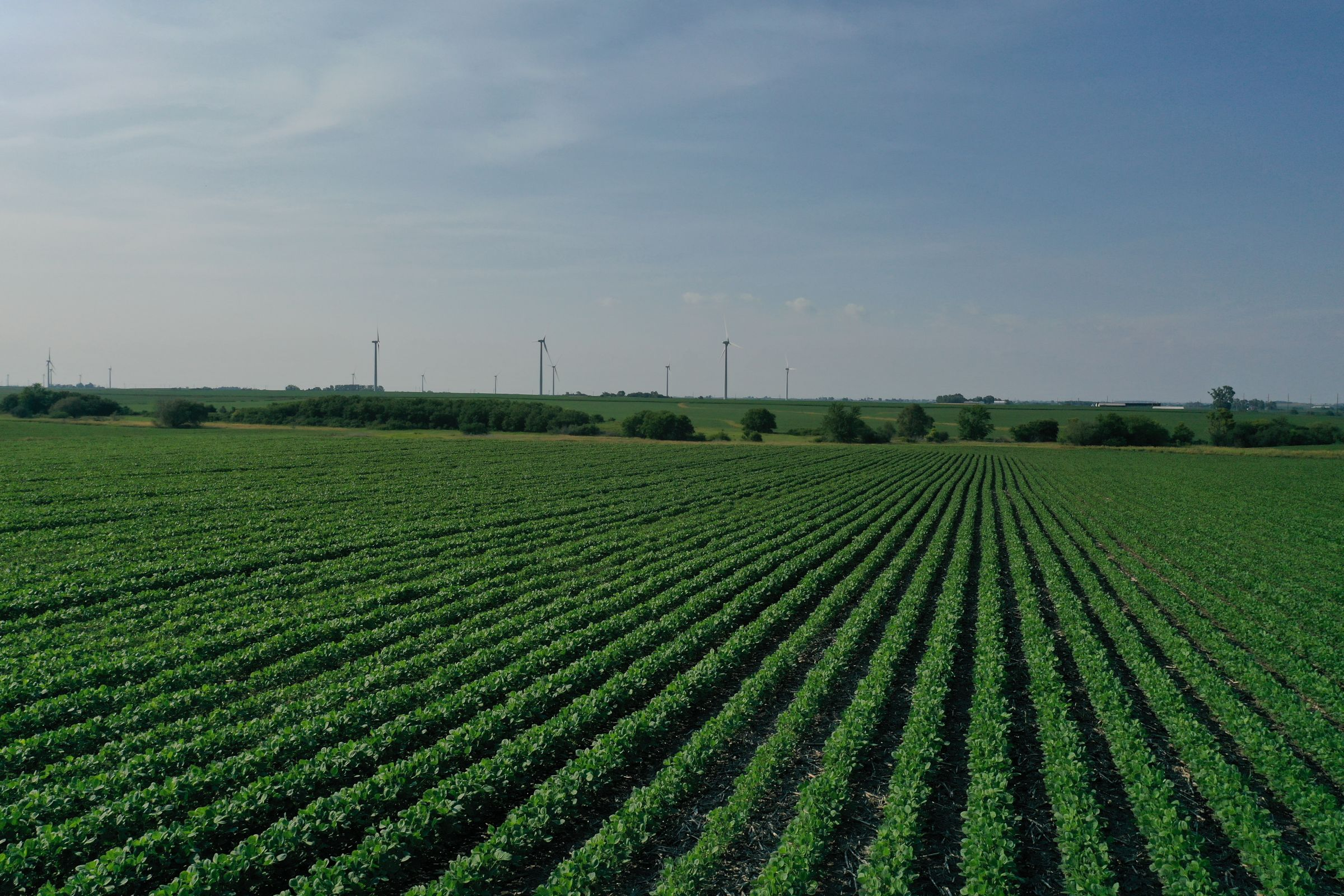 story-county-iowa-80-acres-listing-number-15620-1-2021-07-02-151517.JPG