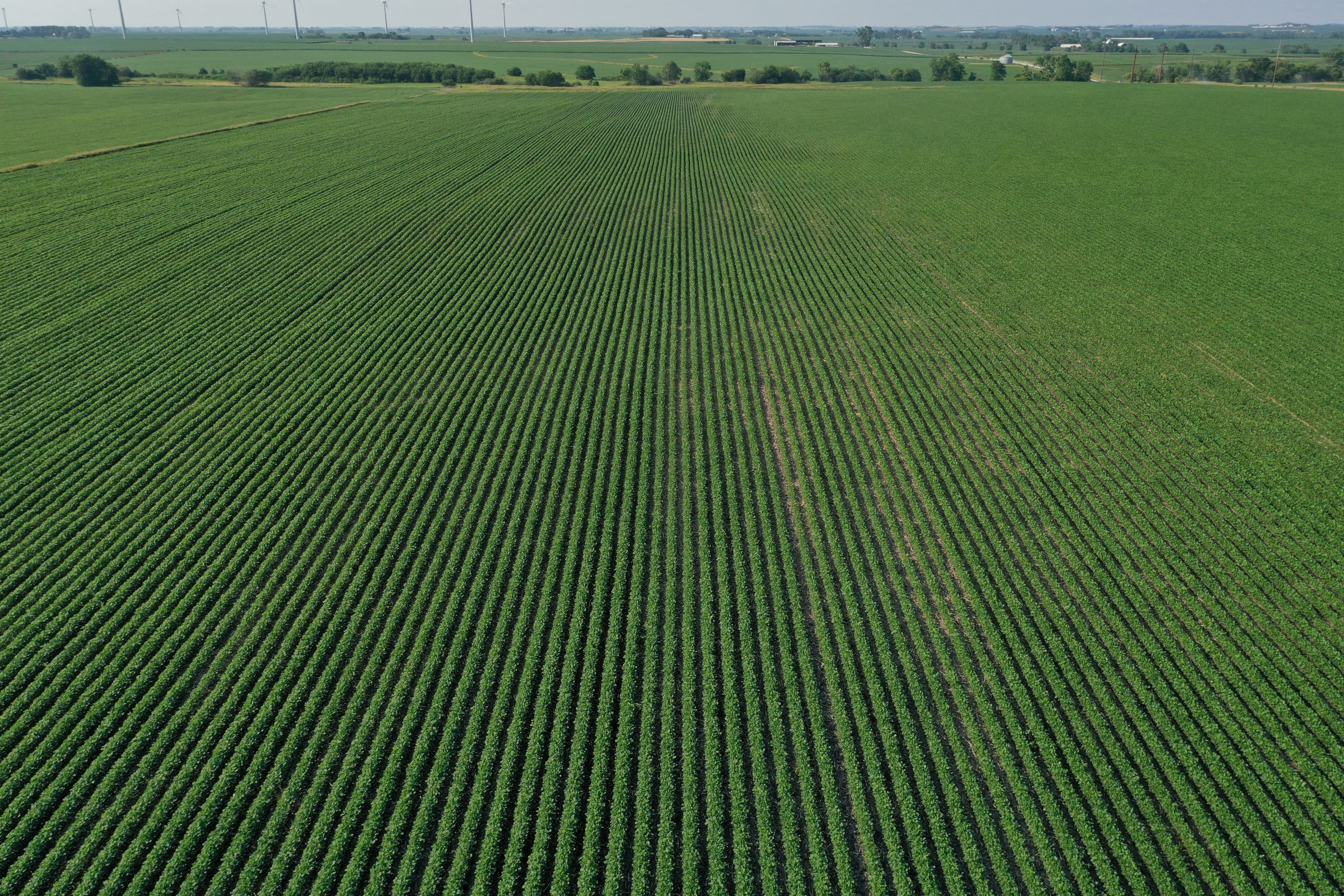 story-county-iowa-80-acres-listing-number-15620-3-2021-07-02-151522.JPG