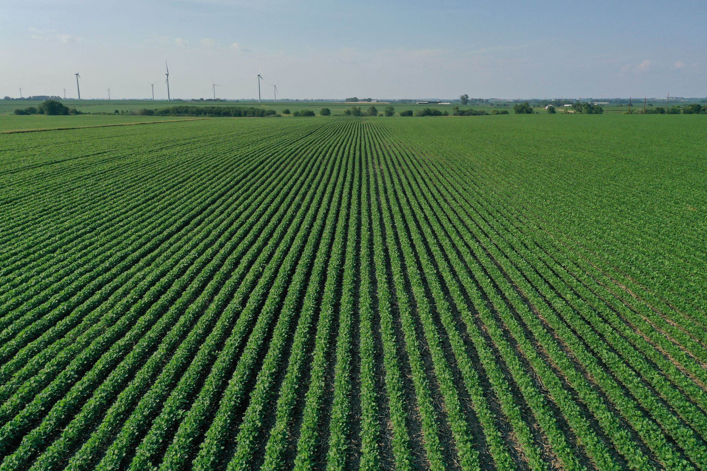 story-county-iowa-80-acres-listing-number-15620-4-2021-07-02-151524.JPG
