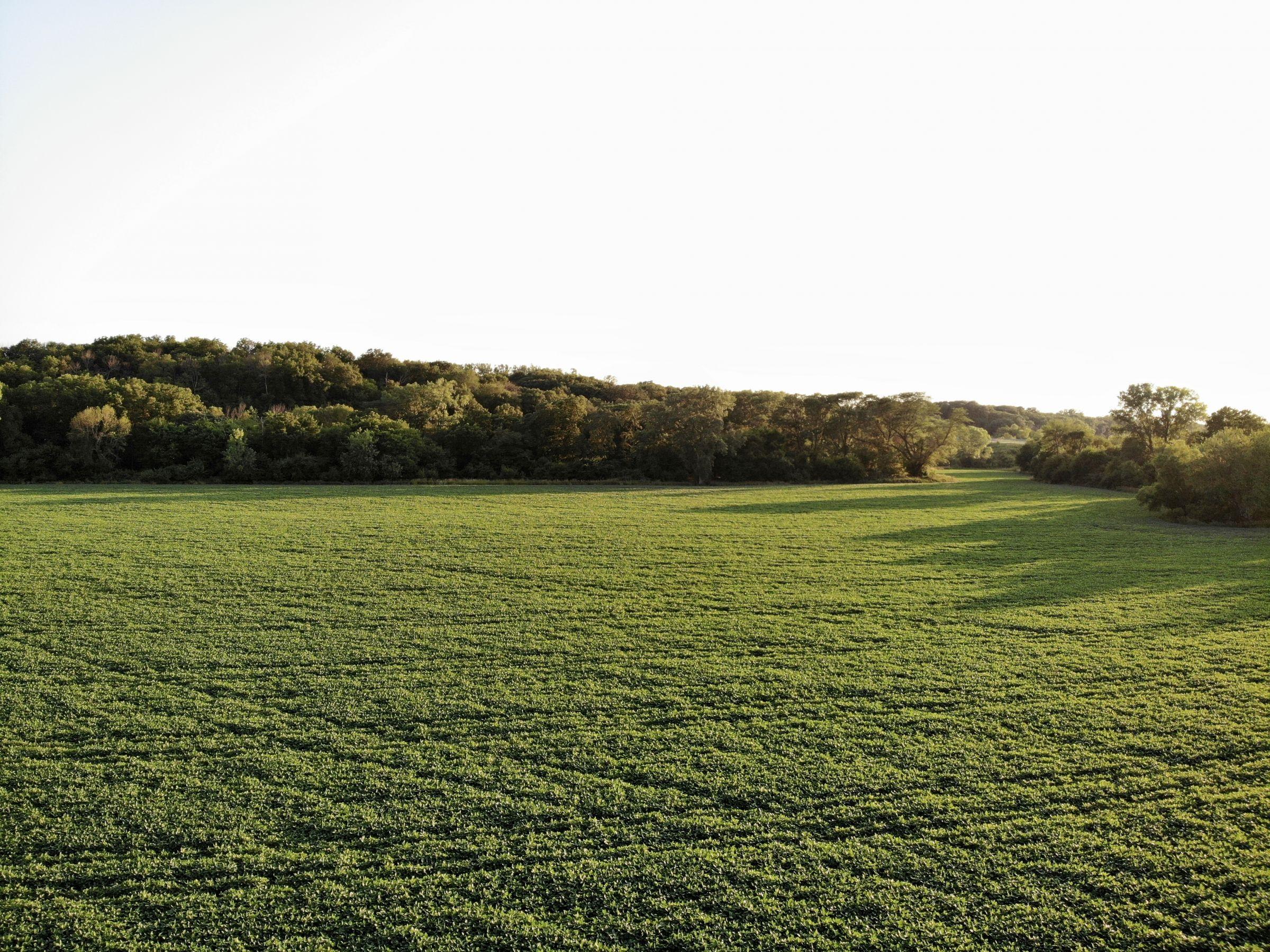 land-polk-county-iowa-89-acres-listing-number-15626-6-2021-07-09-142617.jpg