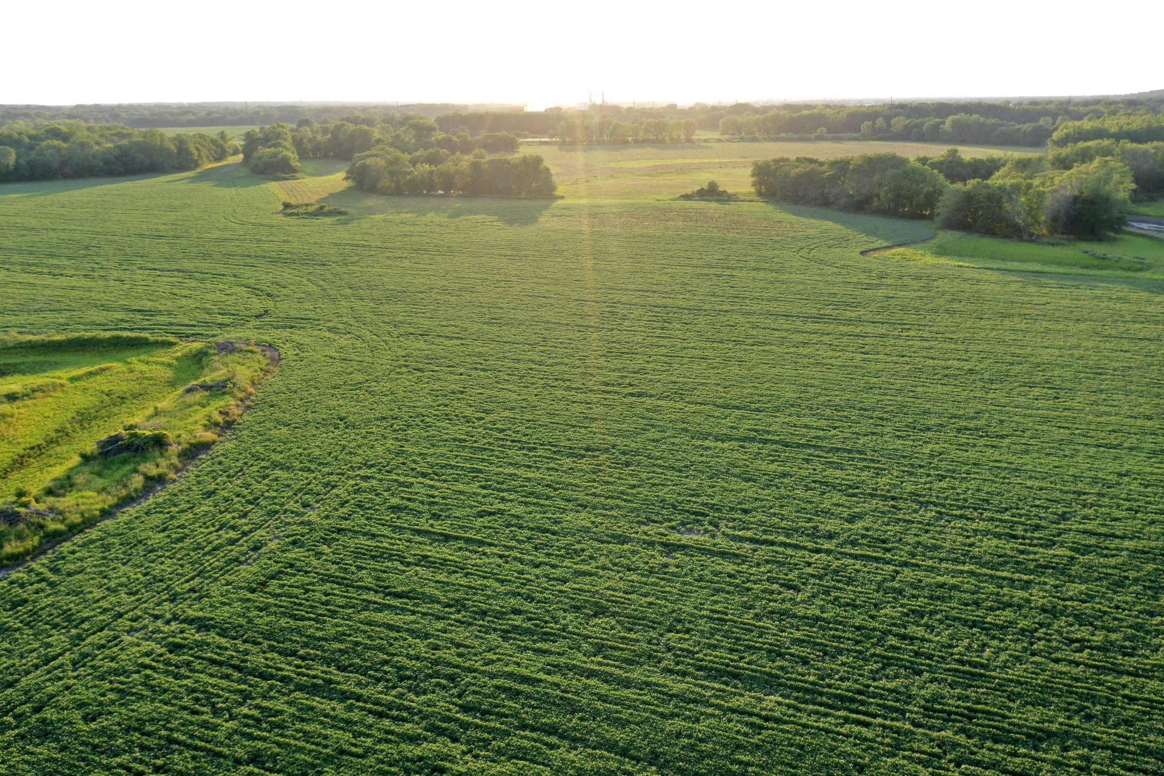 land-polk-county-iowa-242-acres-listing-number-15627-2-2021-07-09-154056.JPG