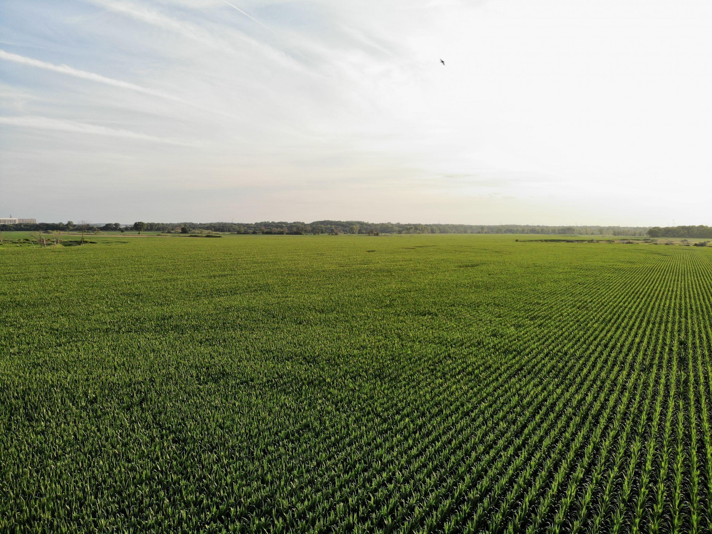 land-polk-county-iowa-242-acres-listing-number-15627-3-2021-07-09-145455.jpg