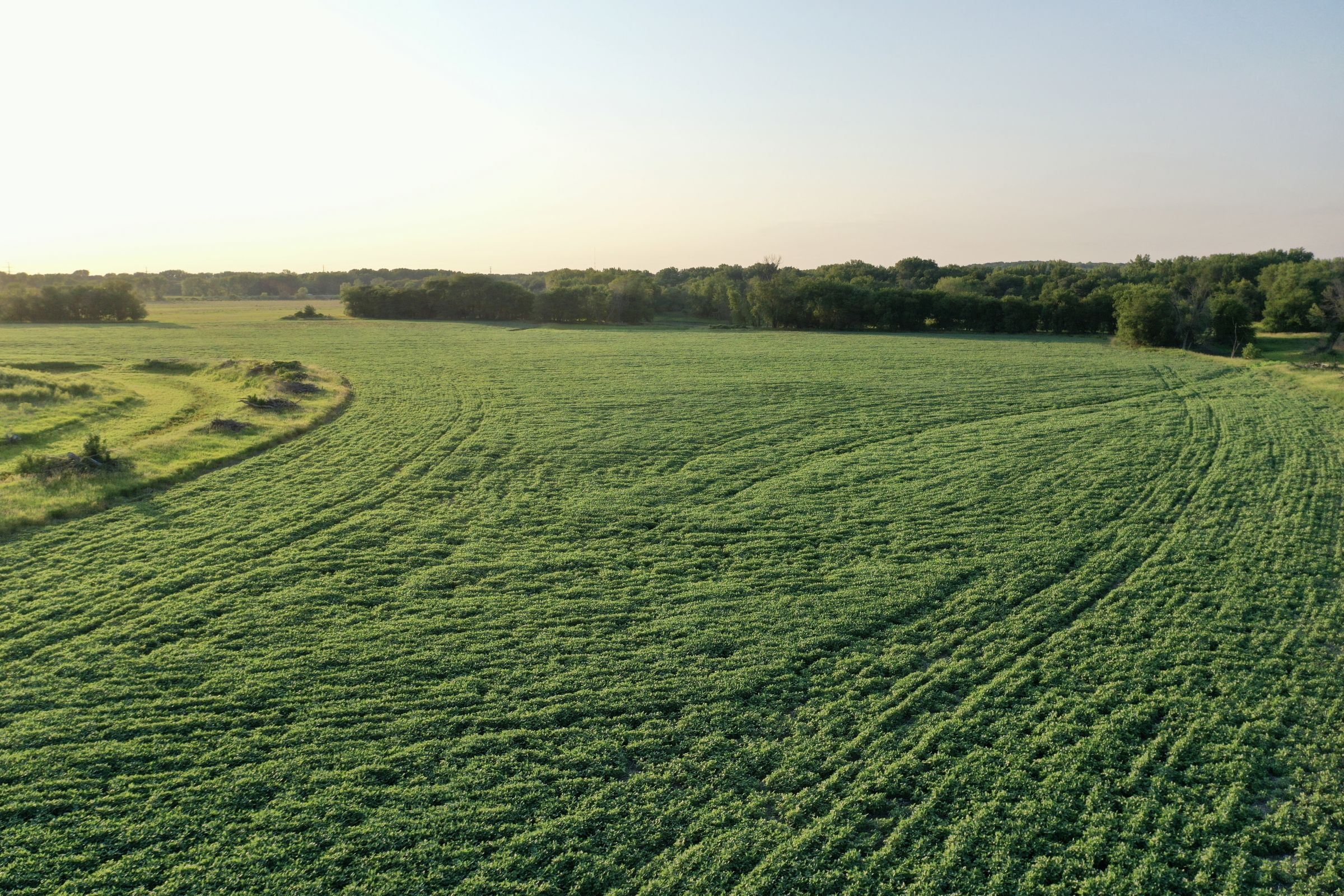 land-polk-county-iowa-242-acres-listing-number-15627-3-2021-07-09-154058.JPG
