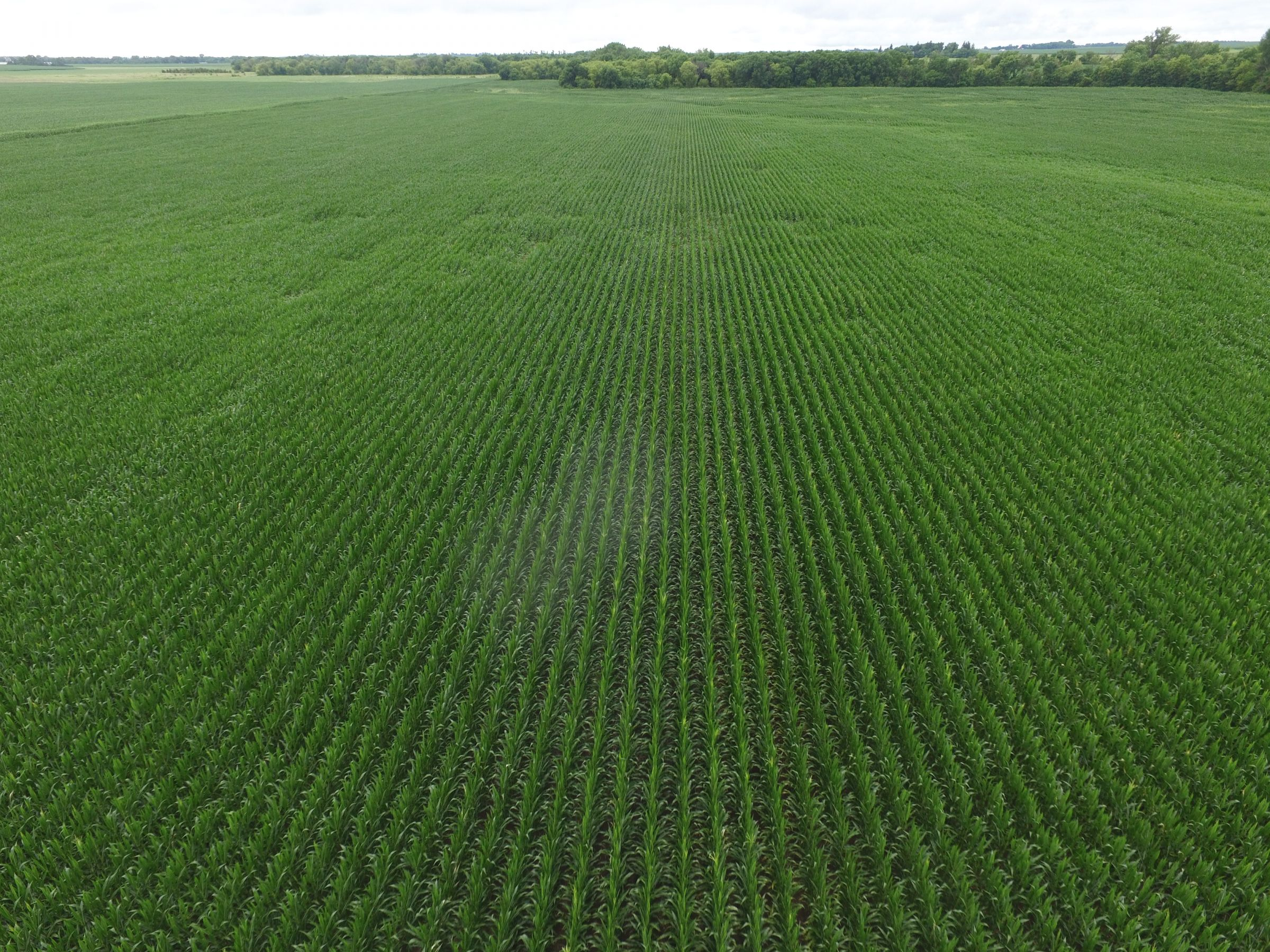 auctions-land-floyd-county-iowa-112-acres-listing-number-15630-11-2021-07-13-192254.JPG