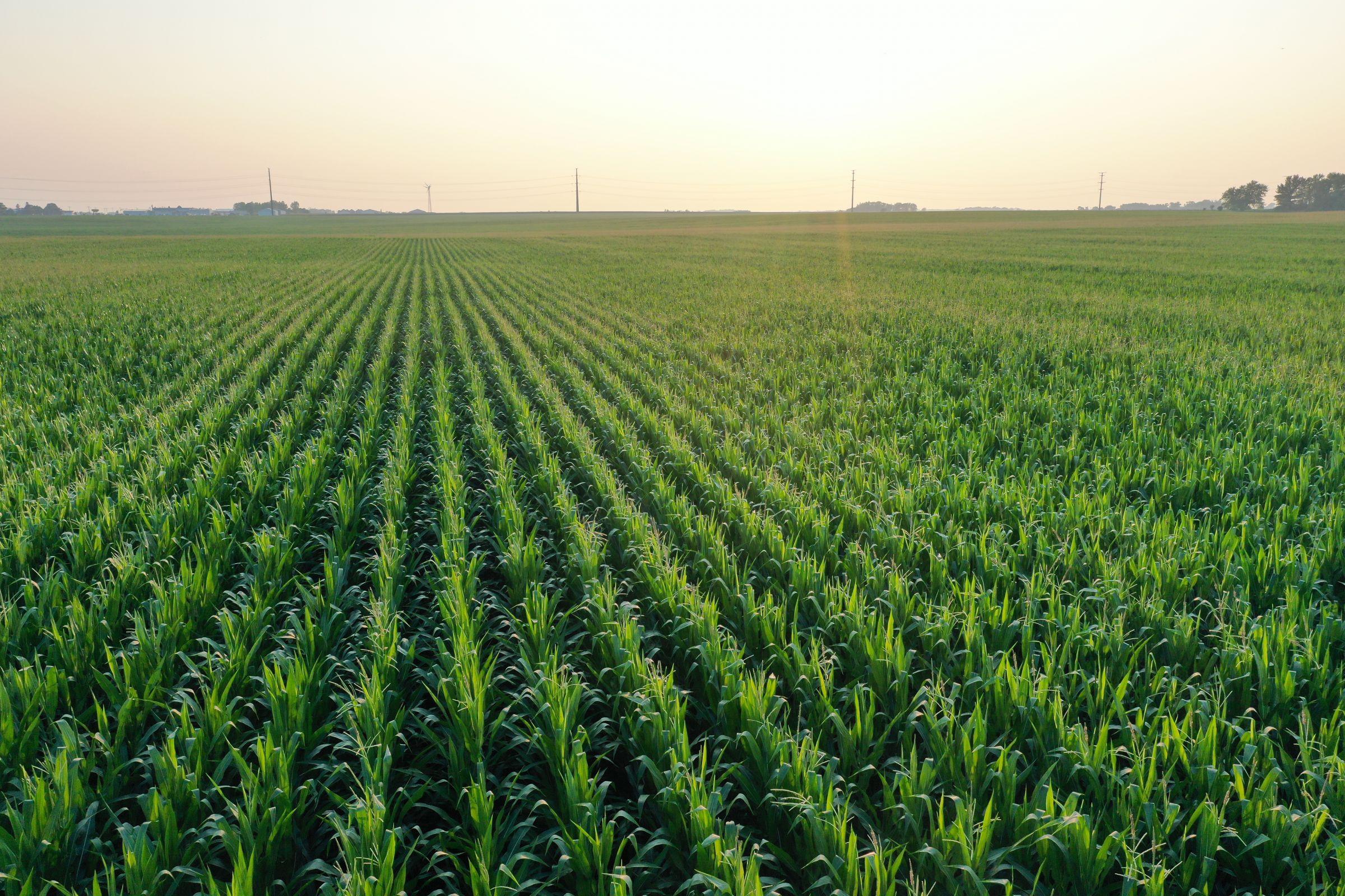 development-land-commercial-cerro-gordo-county-iowa-108-acres-listing-number-15644-1-2021-07-19-140718.JPG