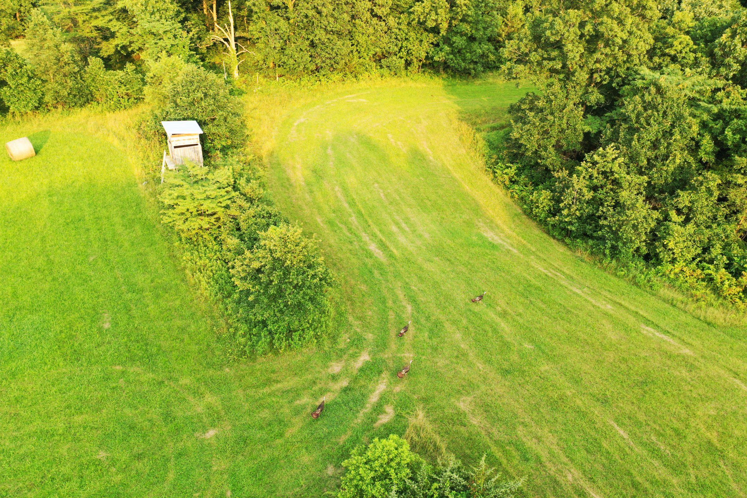 land-lee-county-iowa-340-acres-listing-number-15649-3-2021-07-21-185538.jpg