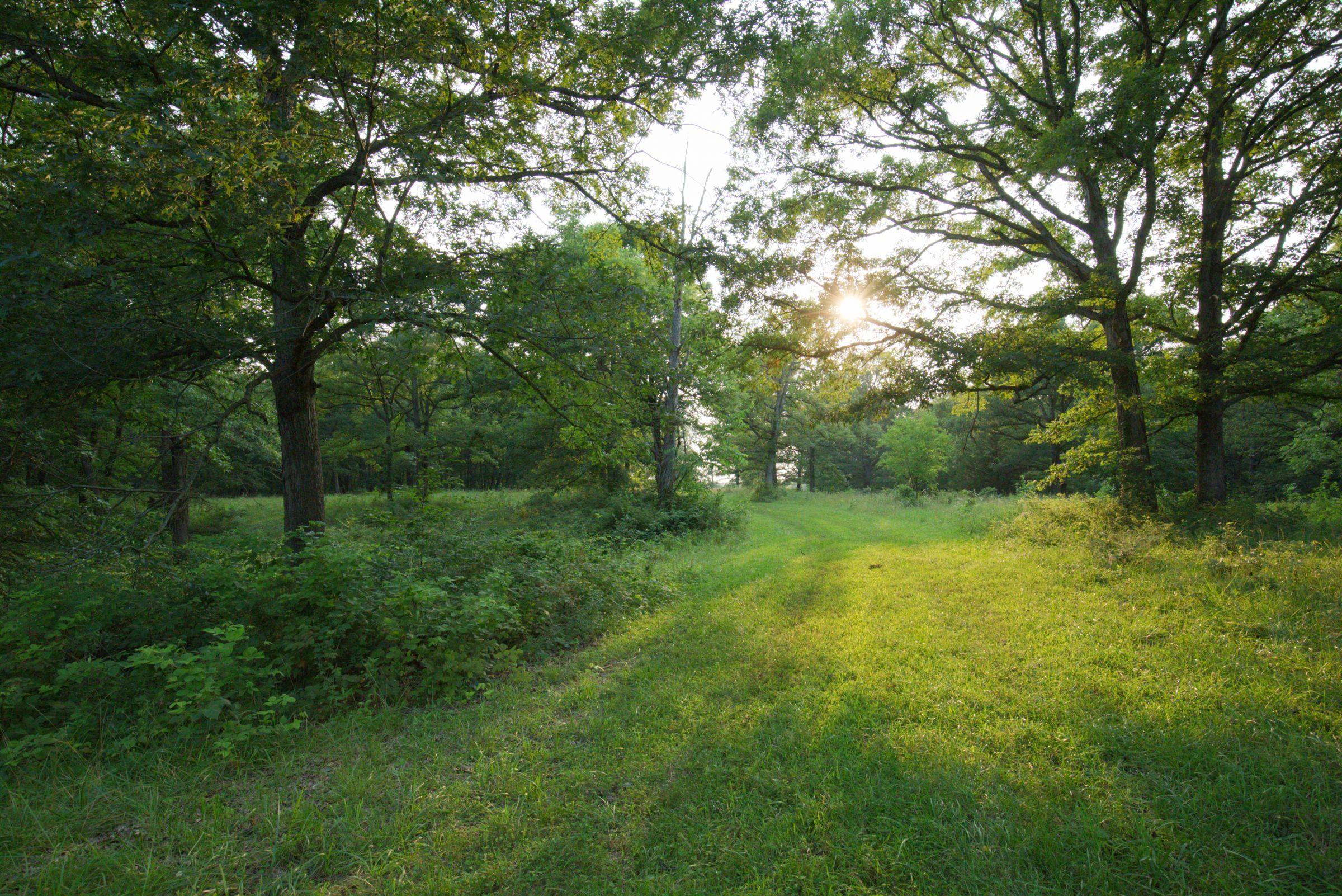 land-lee-county-iowa-340-acres-listing-number-15649-4-2021-07-21-184940.jpg