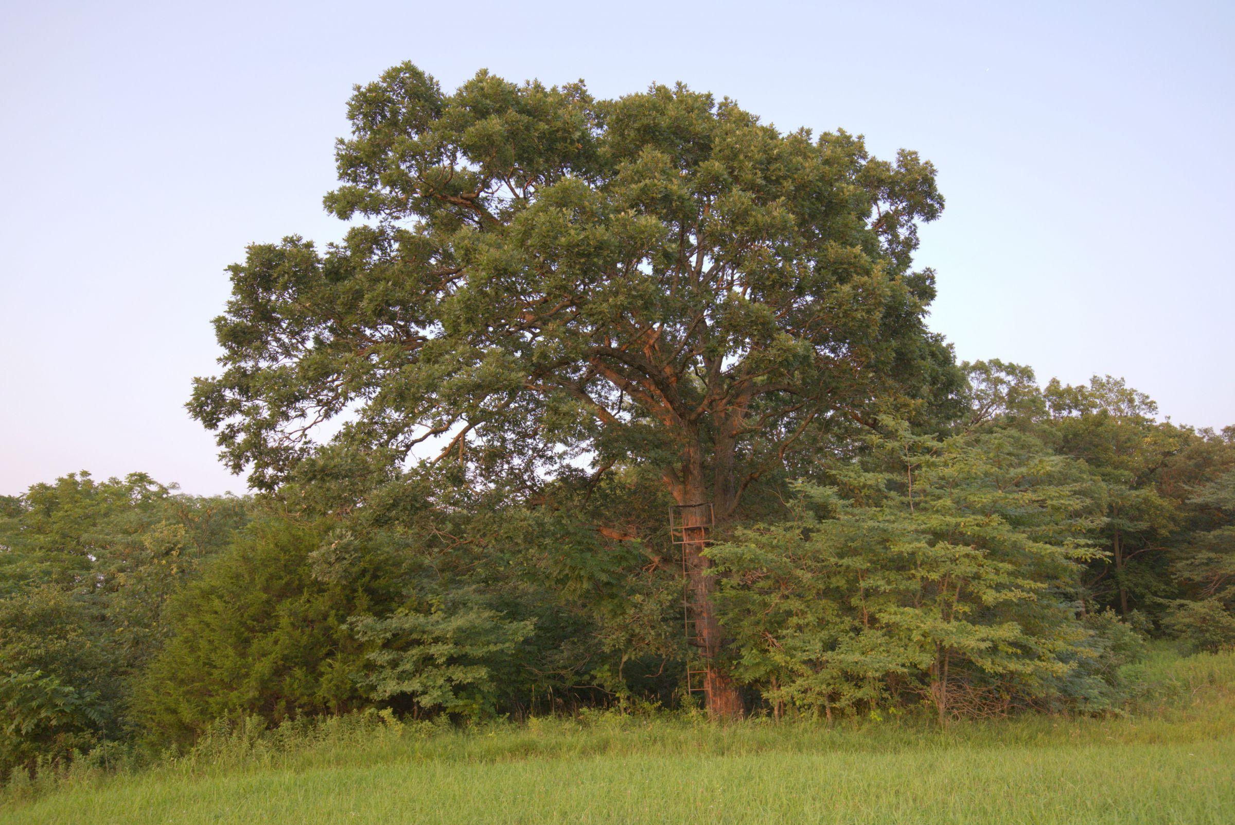 land-lee-county-iowa-340-acres-listing-number-15649-5-2021-07-21-185151.jpg