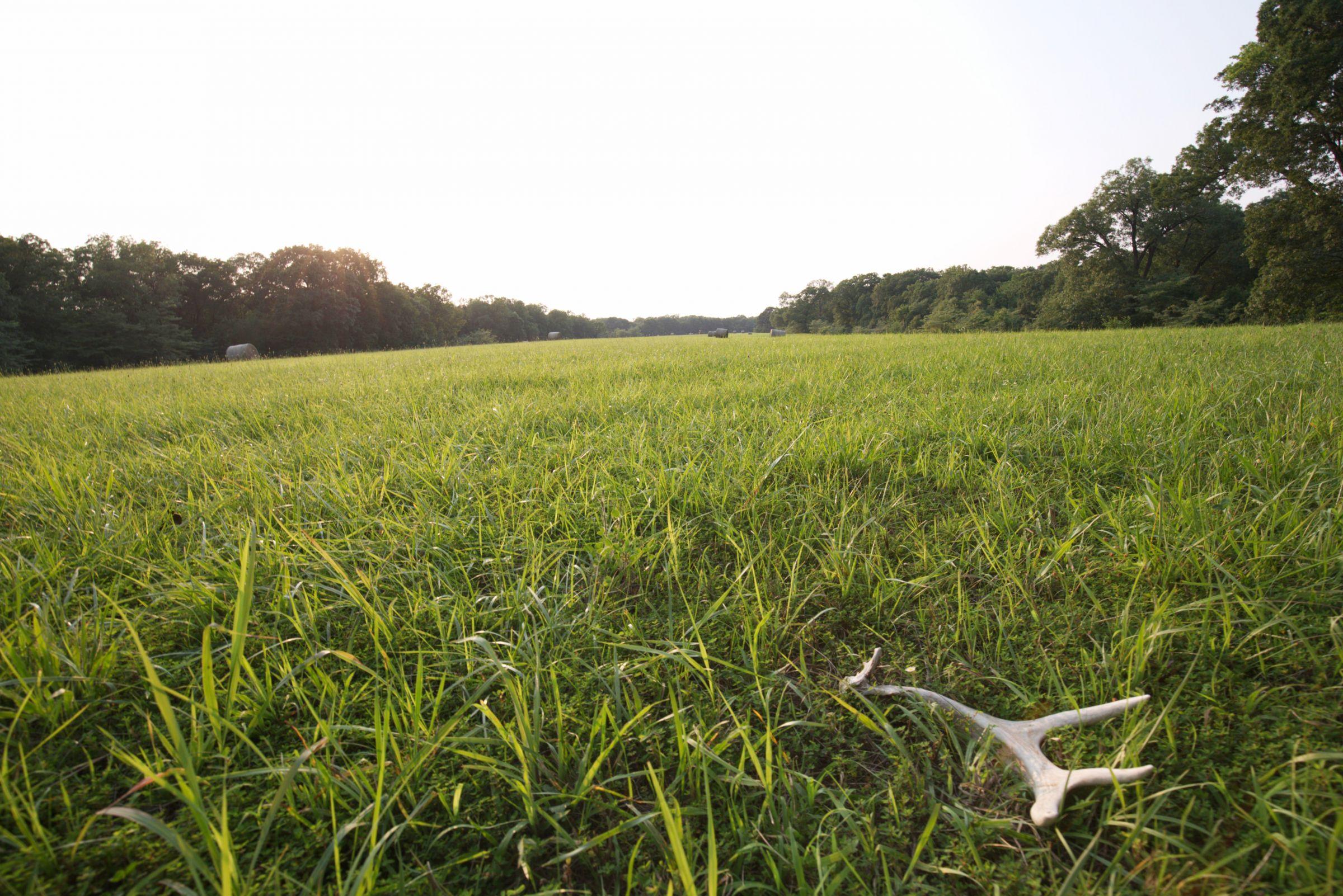 land-lee-county-iowa-340-acres-listing-number-15649-6-2021-07-21-184945.jpg