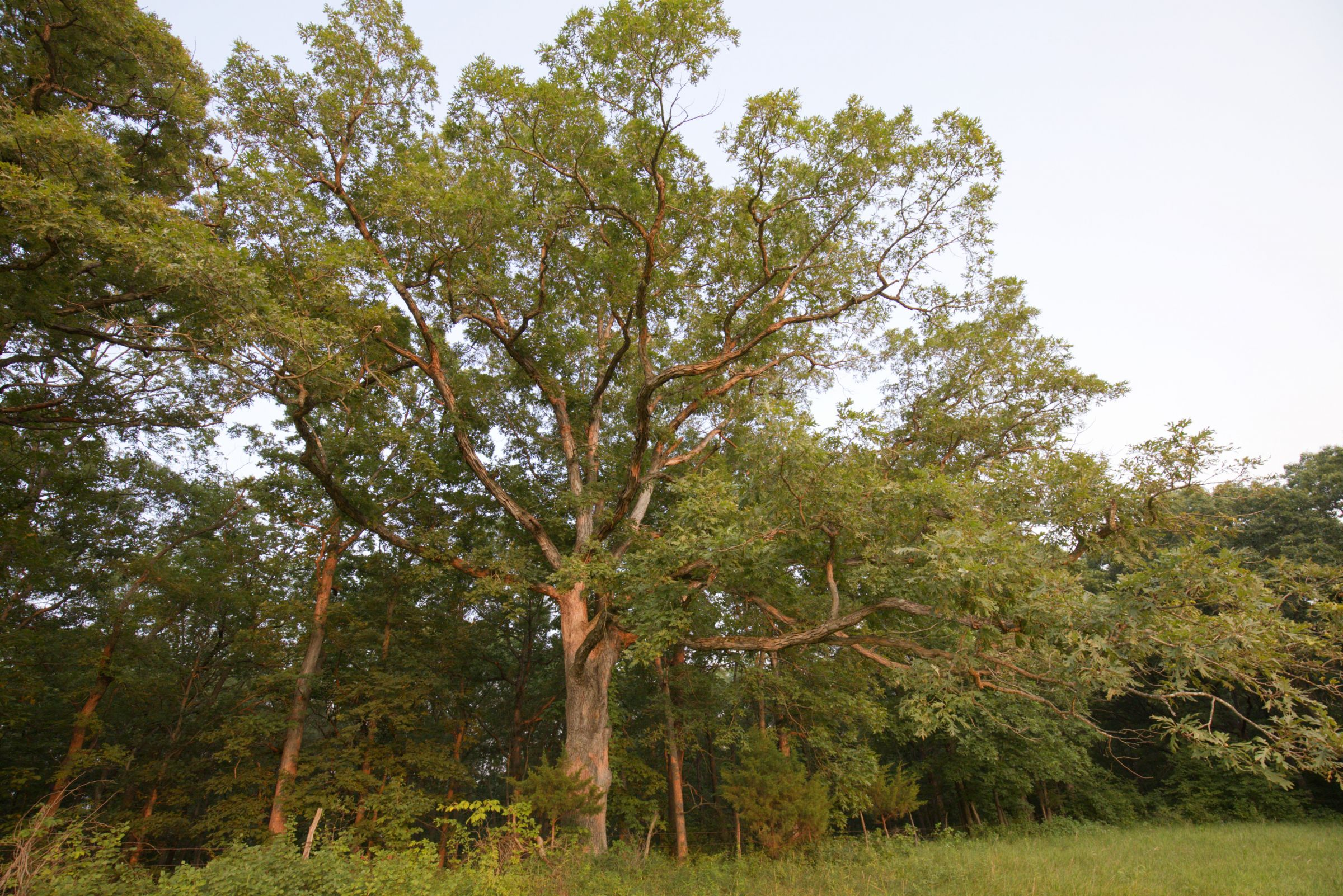 land-lee-county-iowa-340-acres-listing-number-15649-9-2021-07-21-185924.jpg