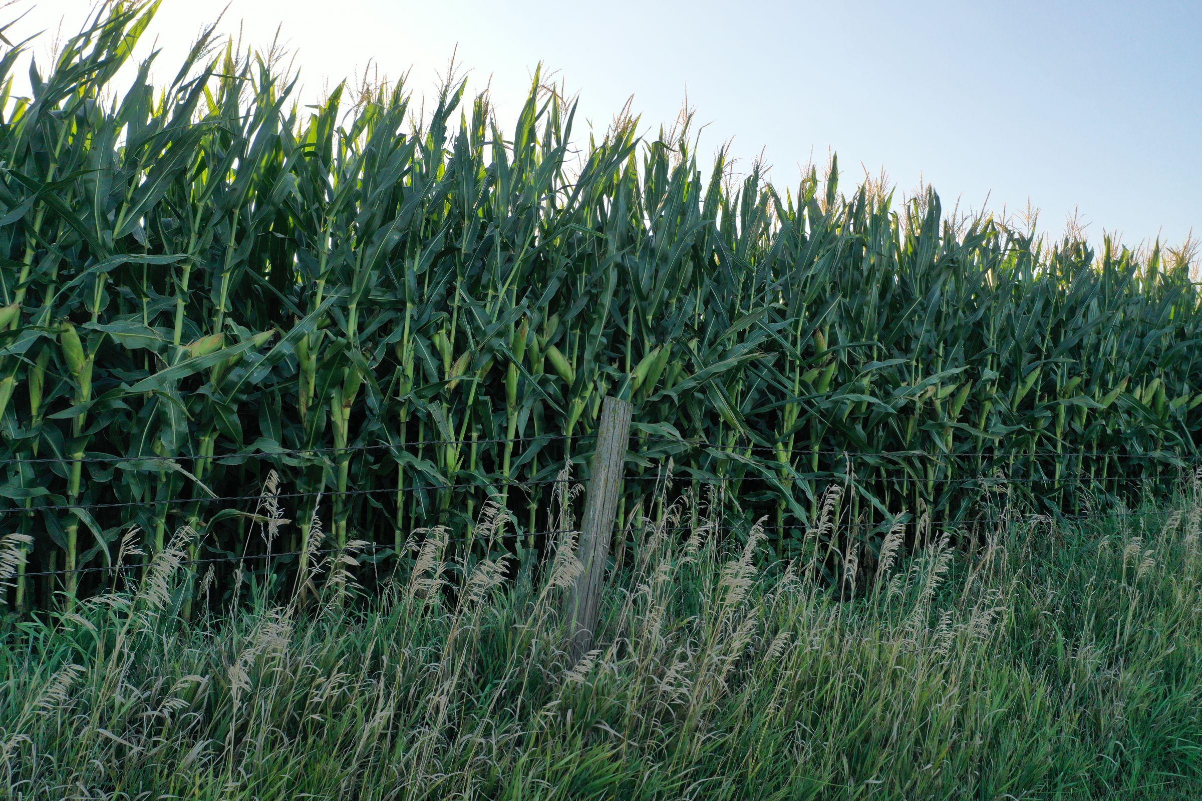 Shelby County Iowa Farmland For Sale