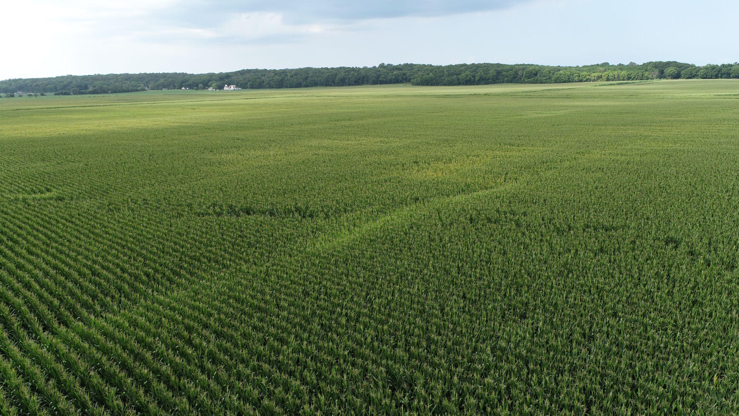 land-whiteside-county-illinois-146-acres-listing-number-15705-0-2021-08-27-180420.JPG