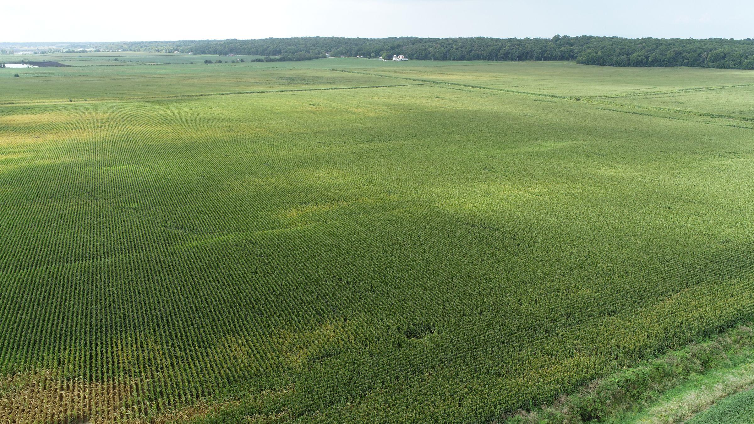 land-whiteside-county-illinois-146-acres-listing-number-15705-1-2021-08-27-180458.JPG
