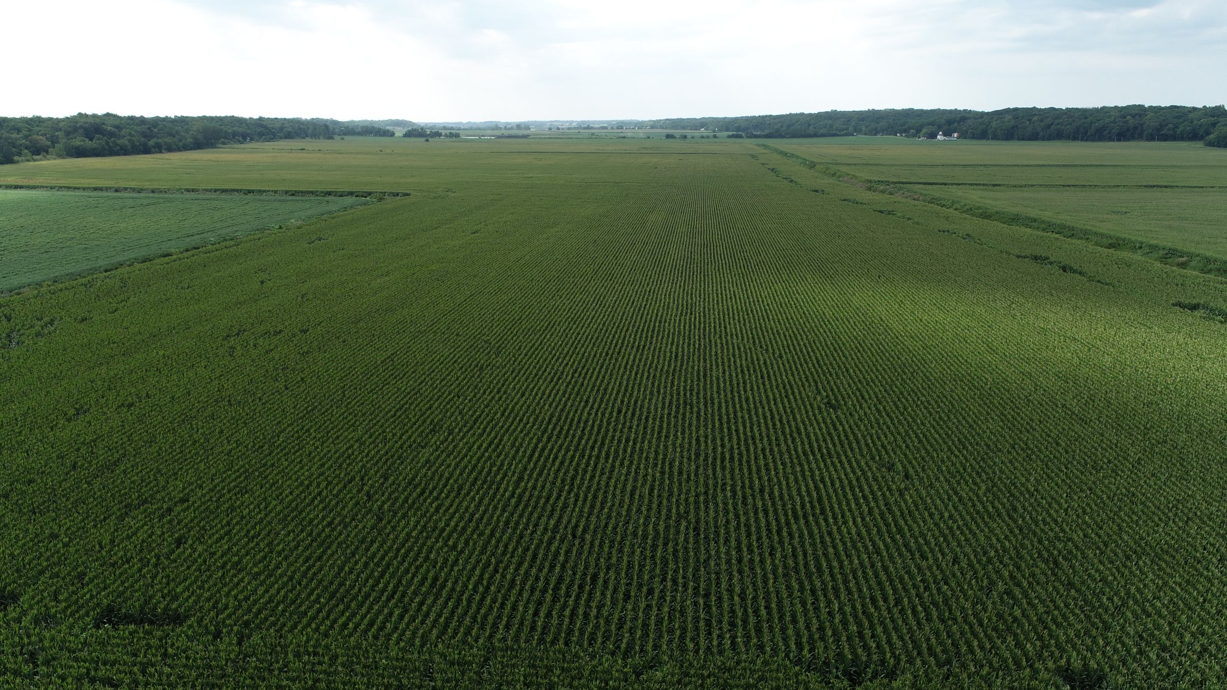 land-whiteside-county-illinois-146-acres-listing-number-15705-3-2021-08-27-180502.JPG