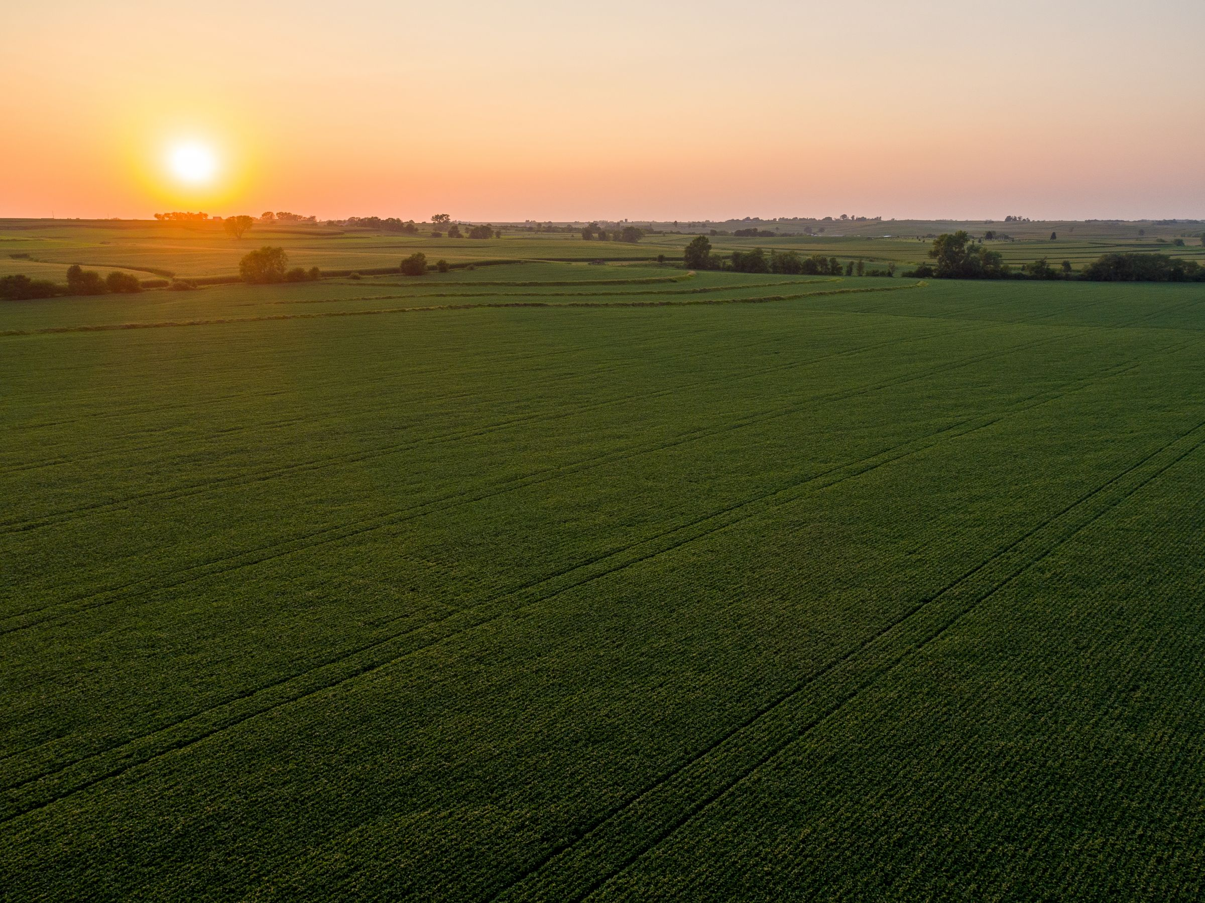 auctions-land-montgomery-county-iowa-703-acres-listing-number-15724-2-2021-09-07-151056.jpeg