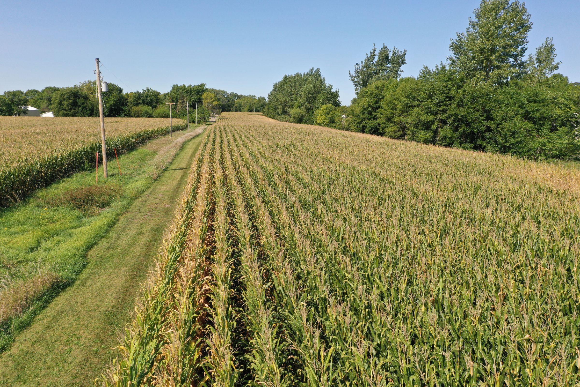 Guthrie County Iowa Farmland for Sale