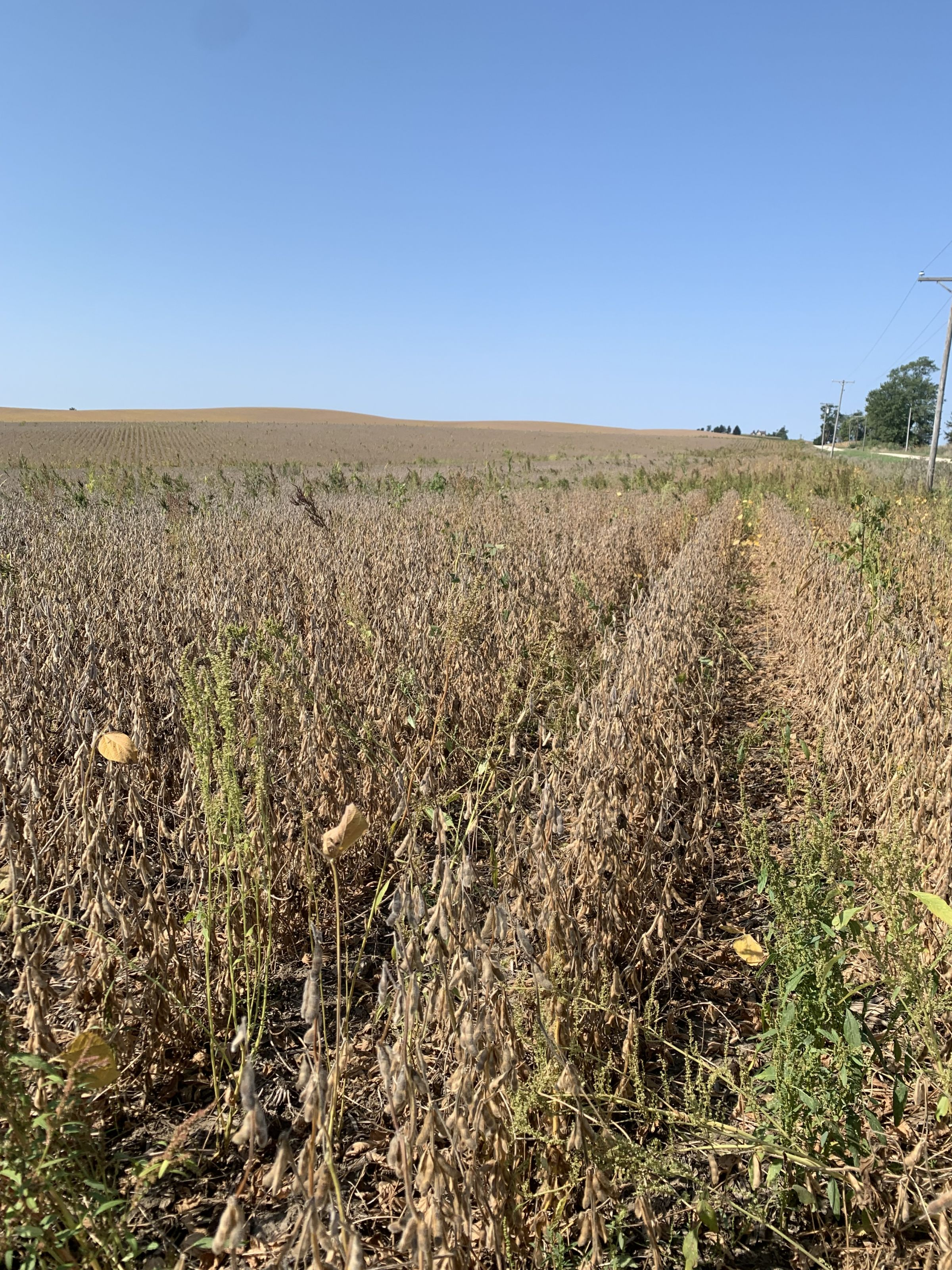 auctions-jackson-county-iowa-79-acres-listing-number-15751-1-2021-09-21-152719.jpg