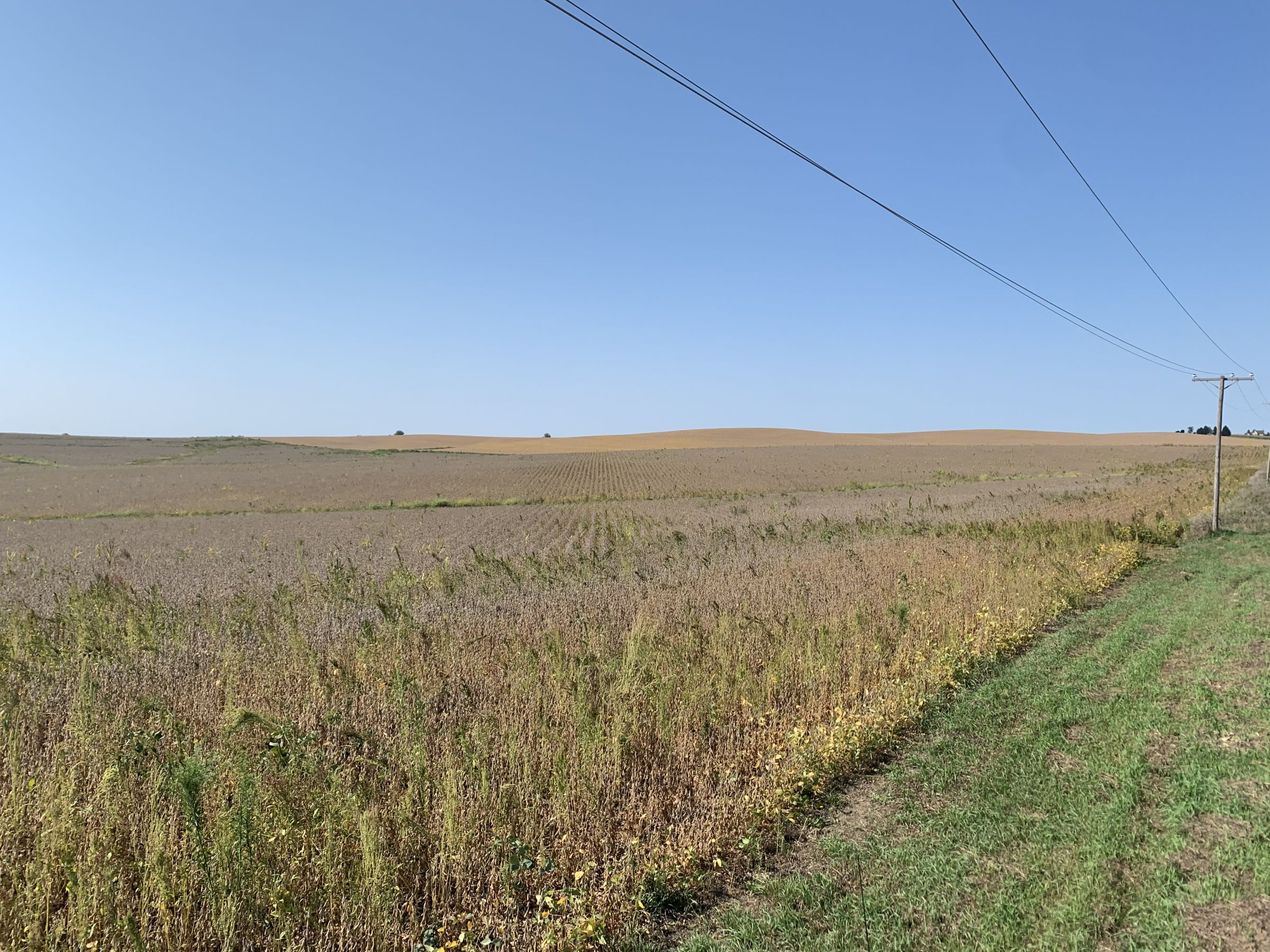 auctions-jackson-county-iowa-79-acres-listing-number-15751-3-2021-09-21-152722.jpg