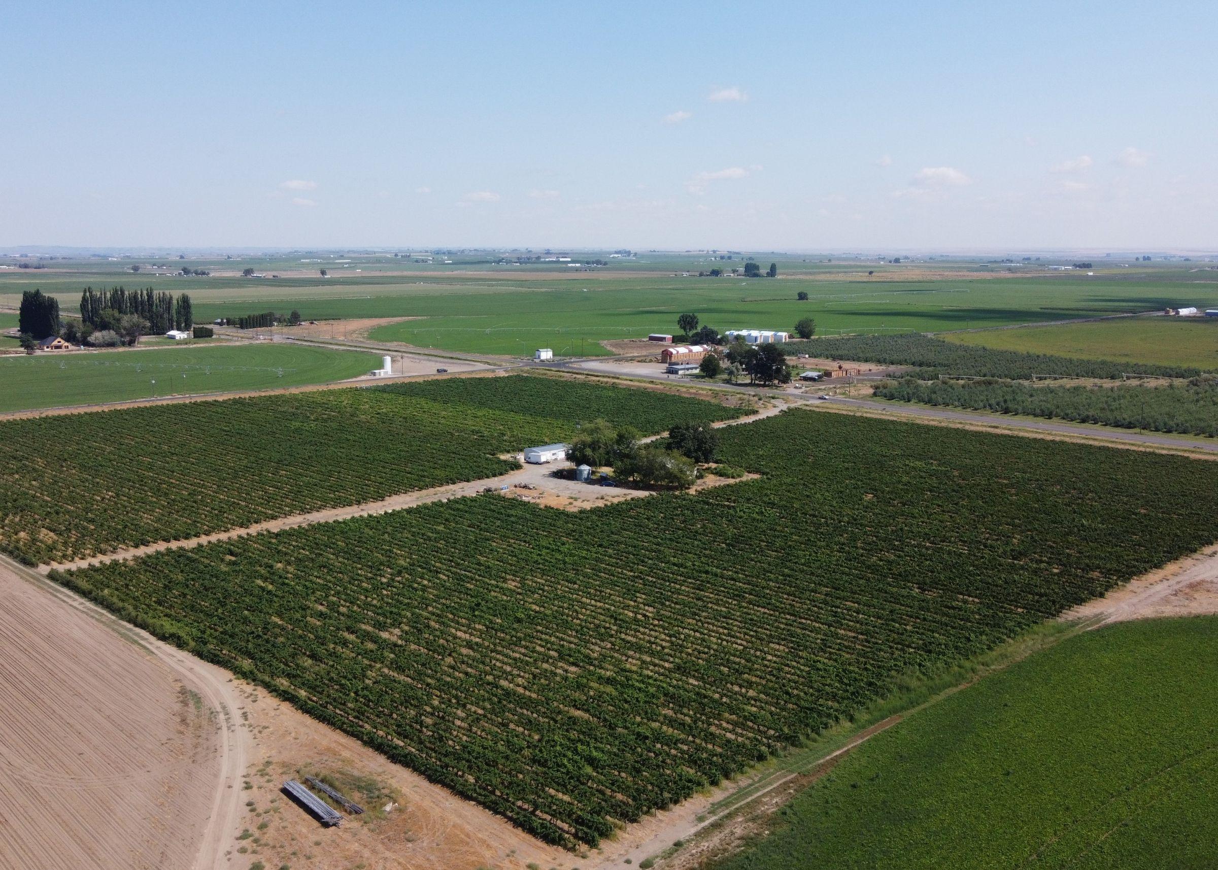 Taylor Flats Vineyard