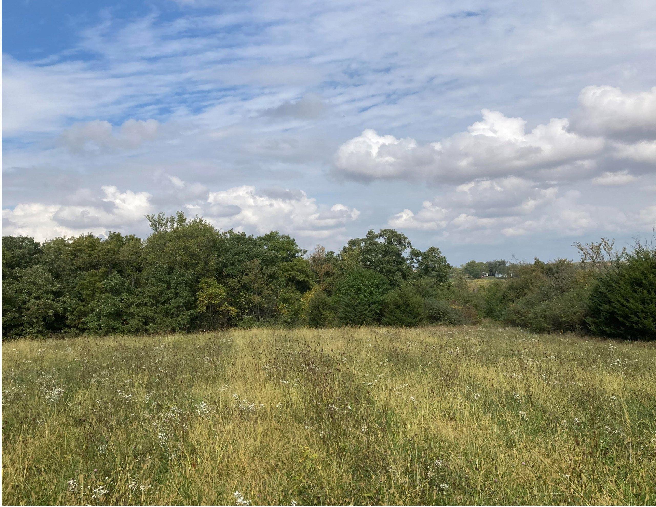 land-warren-county-iowa-200-acres-listing-number-15810-Back 80-0.jpg