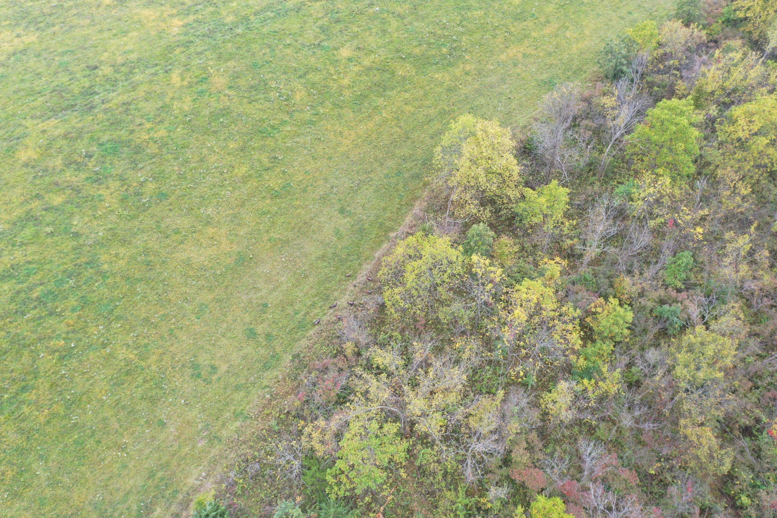 land-warren-county-iowa-200-acres-listing-number-15810-DJI_0599-4.jpg