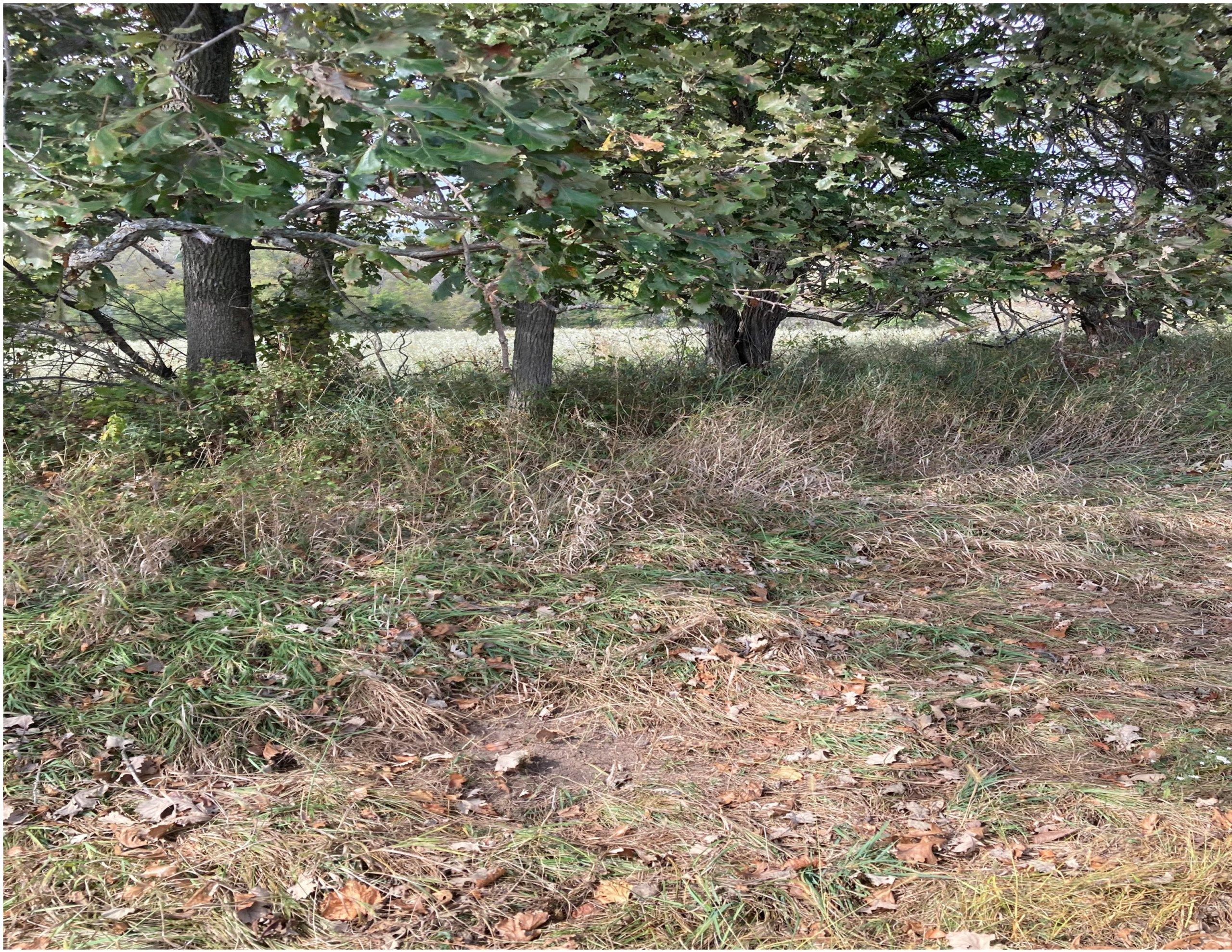 land-warren-county-iowa-200-acres-listing-number-15810-SCrape-3.jpg